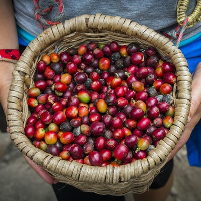Gettyimages 700180516 Colombia Kaffe 72