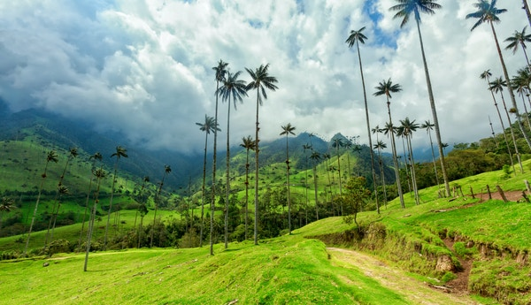 Gettyimages 884474368 Colombia Valle De Cocora