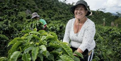 Istock 95733613 Colombia Kaffe
