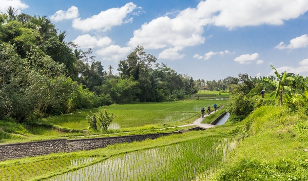 Getty Images 1065368476 Indonesia bali sykkel ubud