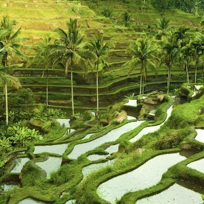 I Stock 000012509983 indonesia Bali