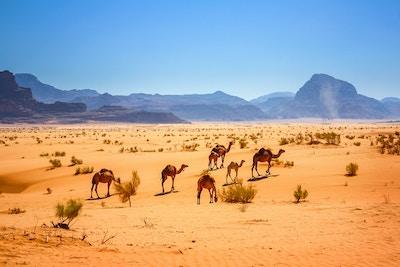 Gettyimages 510861422 Jordan Kamel Wadi Rum