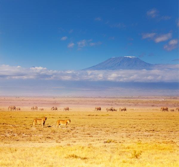 Gettyimages 628922630 Kenya Amboseli Love