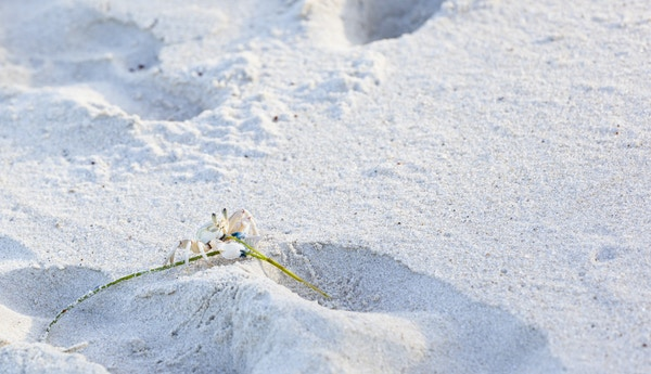 Kenya Diania myk strand