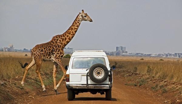 Gettyimages 108350405 Kenya Nairobi Nasjonalpark Safari Sjiraff