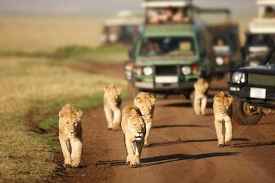Stocksy Txp222768Daxo9000 Afrika Safari