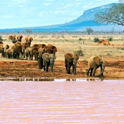 Gettyimages 492483888 Kenya Tsavo East Elefant