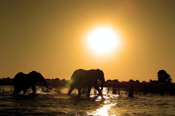 Istock 497797243 Afrika Botswana Chobe Elefant Safari