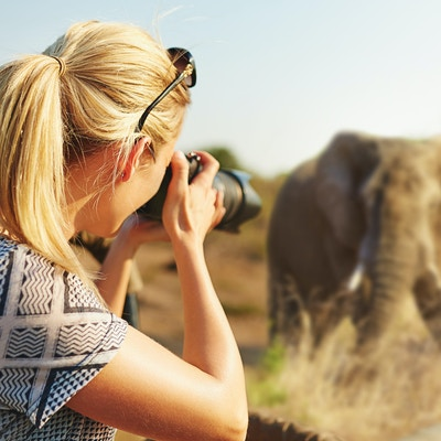 I Stock-506872450_Afrika_Sor-Afrika_safari_Kruger_elefant