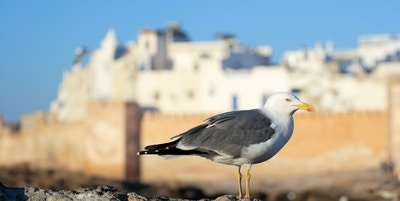 Istock 5711469 Marokko Essaouira