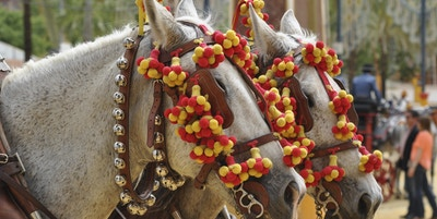 Horses decked in fair jerez de la frontera 466254268 4288x2848 4c50853f b84f 4a3e 8f83 5055afd097a9