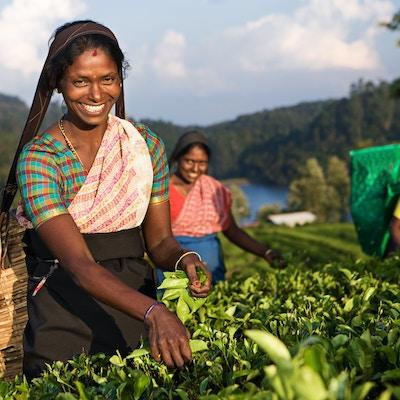 Istock 182181874 Sri Lanka Te Kvinner