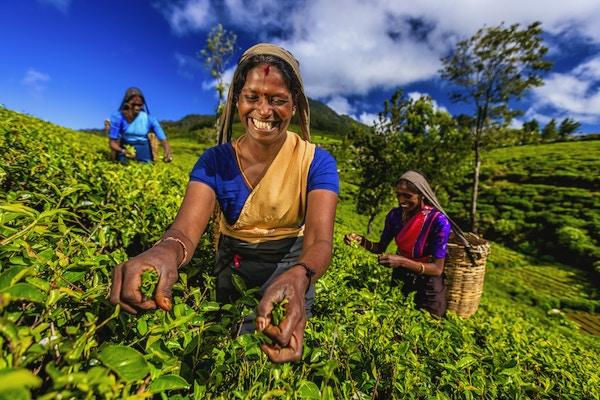 Istock 543053910 Sri Lanka Te Kvinner