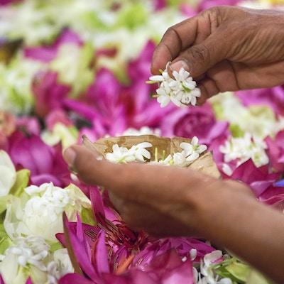 Istock 81308369 Kandy Blomster Sri Lanka