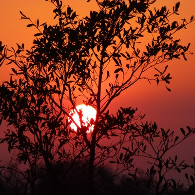 Aor Afrika Sabi Sands Kruger Soloppgang HJ