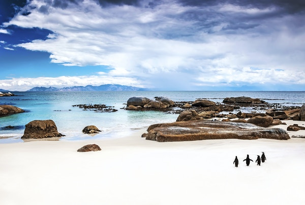 I Stock 000040113848 Sor Afrika Cape Town Cape Peninsula Boulders Beach 2