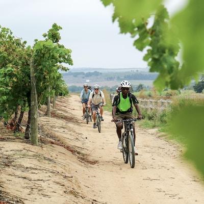 Cycling through the Vineyards 10