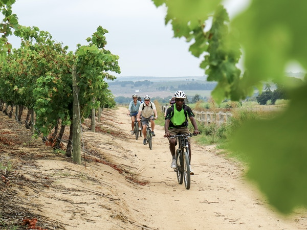 Cycling through the Vineyards 10