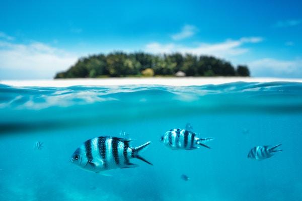 Getty Images 518413074 Tanzania Zanzibar