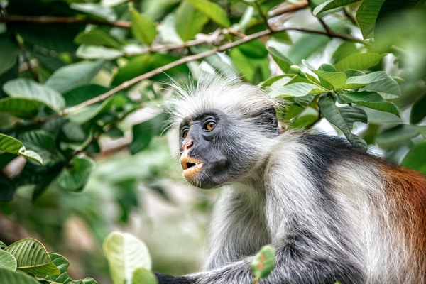 Getty Images 996127588 Tanzania Zanzibar 13