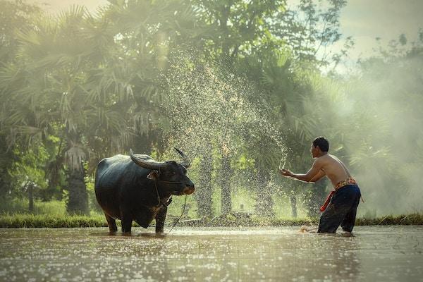 Istock 598230860 Vitenam Mekong